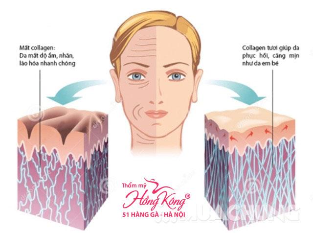 Collagen tự nhiên là một loại protein, chiếm khoảng 70 – 80% cấu trúc da