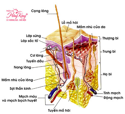 The Record 618 loại bỏ lông từ giai đoạn mầm nhú