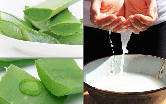 Nha đam kết hợp với nước vo gạo giúp trị mụn cám dưới cằm hiệu quả