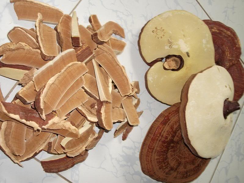 Trẻ hóa da bằng thảo dược - Nấm linh chi