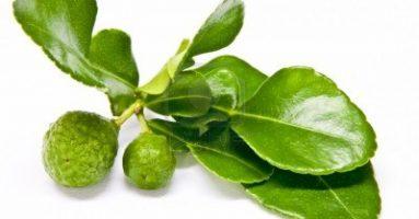 Bạn đã biết cách trị mụn ở mặt bằng lá chanh chưa?
