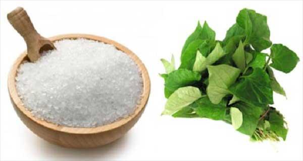 Rau diếp cá và muối rất tốt cho da nhờn có mụn